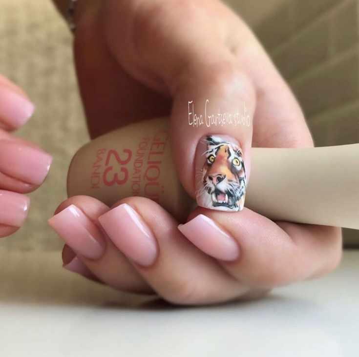 Нюдовый маникюр с тигром на большом пальце на квадратные ногти средней длины